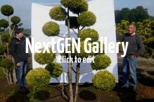 Neue Gartenbonsai im Sortiment – tolle Bilder dieser exklusiven Gartenpflanzen