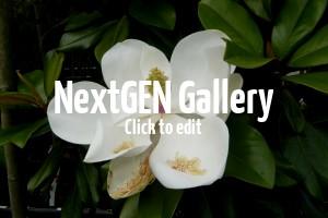 Wunderschöne Bilder von Magnolien mit ihren einmaligen Blüten