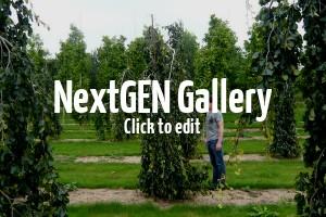 Higlights für den Garten – Neuheiten im Sortiment der  Gartenpflanzen im Herbst 2015