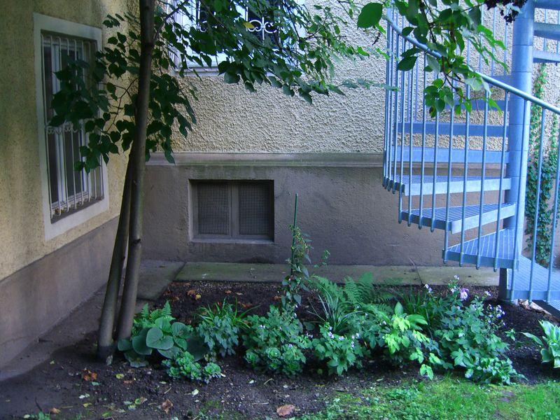 pflanzen f r schattigen standort in stadtgarten fragen. Black Bedroom Furniture Sets. Home Design Ideas
