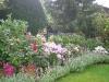 Schönes Arrangement diverser Pflanzen