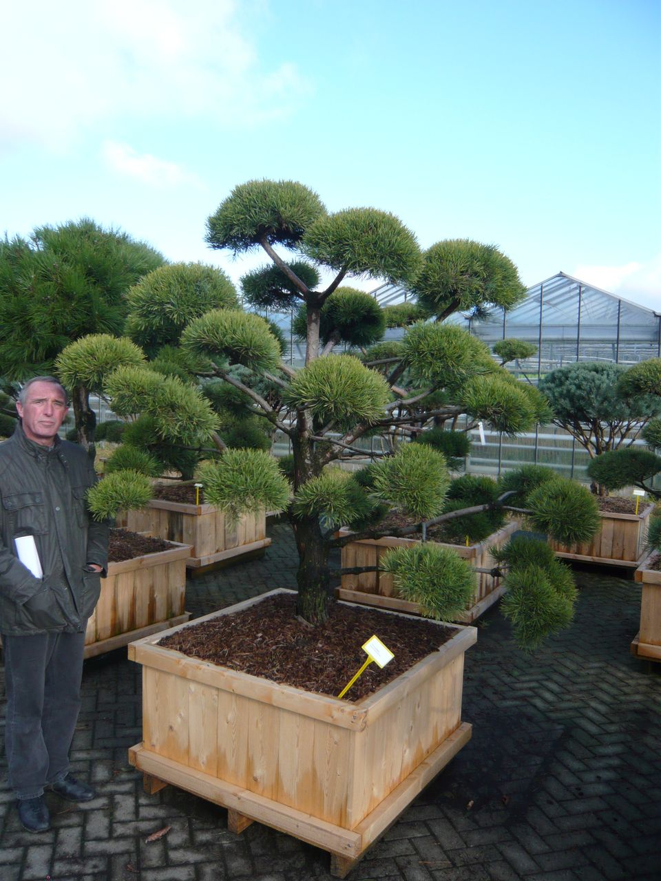 pflanzenspecial gartenbonsai kostbarkeiten japans. Black Bedroom Furniture Sets. Home Design Ideas