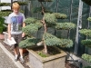 garten-bonsai-0001