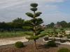 garten-bonsai-0008