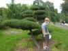 garten-bonsai-0010