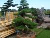 garten-bonsai-0016