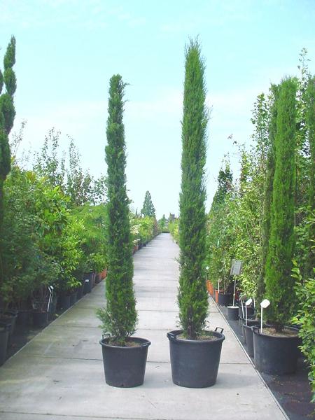 exotische pflanzen fragen bilder pflanz und. Black Bedroom Furniture Sets. Home Design Ideas