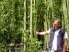 Phyllostachys viridiglaucescens / grüner Pulver Bambus