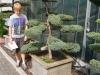 Bonsai für den Garten