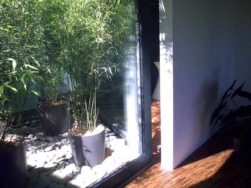 passende pflanzen f r ein atrium gesucht winterhart 350cm und k beltauglich fragen bilder. Black Bedroom Furniture Sets. Home Design Ideas