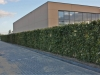 Fertighecke Rotbuche Fagus Sylvatica gepflanzt - direkt ein tolles Ergebnis