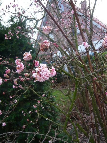 Blütenpracht und Farbenvielfalt auch im Winter? Mit ...