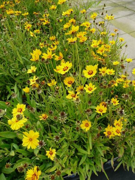 wundersch ne bl hpflanzen ziergeh lze in der trendfarbe