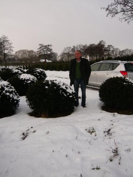 06_buxus_kugel_buchsbaum_winter