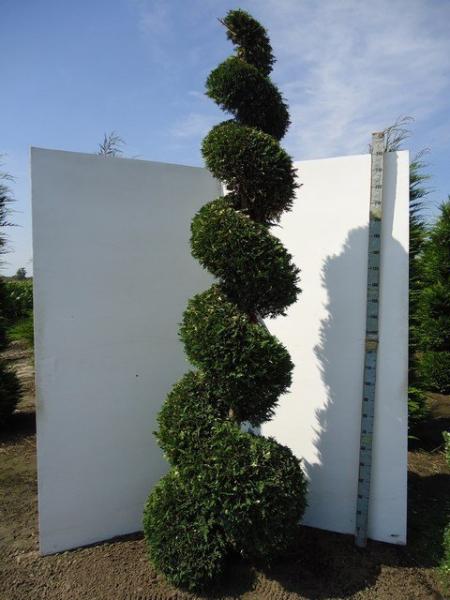 06_spirale_225cm-250cm