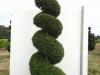 08_spirale_taxus_baccata_300cm-350cm