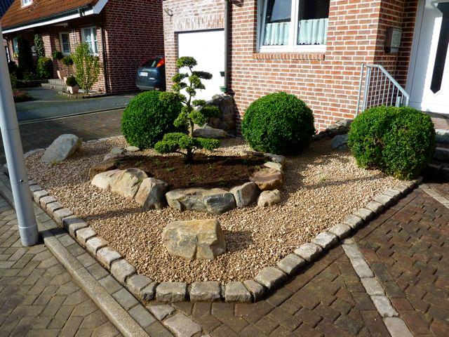 Robuste und repr sentative alternative f r ilex crenata im vorgarten fragen bilder pflanz - Vorgarten pflegeleicht ...