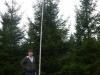 04_fichte_rottanne_picea_abies_600cm