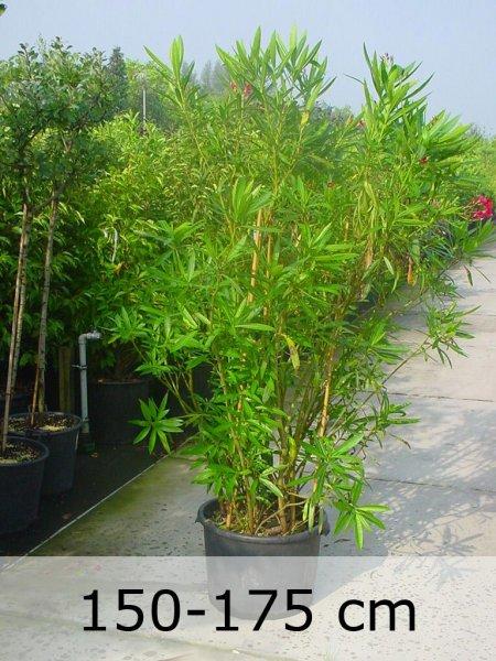 Weitere Gartenpflanzen | Fragen, Bilder, Pflanz- Und