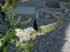 02_Gartenimpressionen