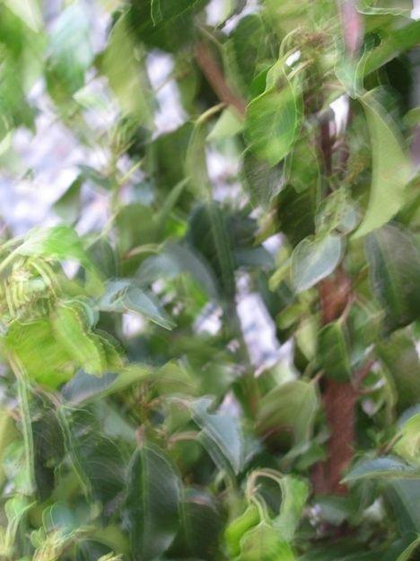 kirschlorbeer umpflanzen kirschlorbeer umpflanzen kirschlorbeer vermehren umpflanzen kaufen. Black Bedroom Furniture Sets. Home Design Ideas