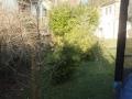 03_Garten_mit_Sichtschutzpflanzen.JPG