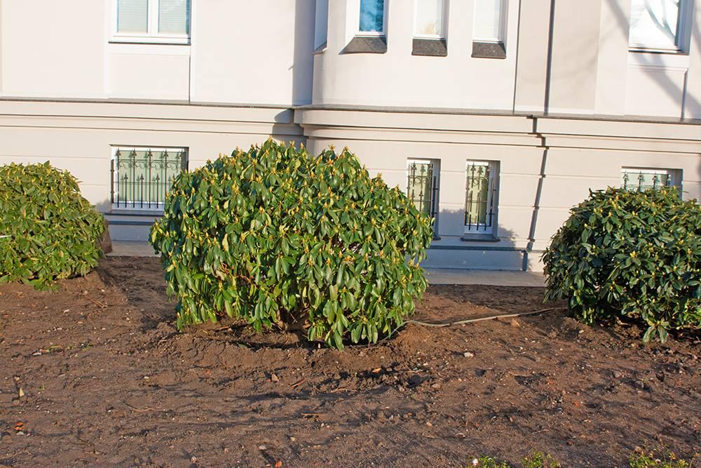tolle bilder von unseren kunden japanischer schnurbaum. Black Bedroom Furniture Sets. Home Design Ideas