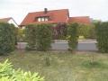 03_Luecken_in-Thuja-Hecke