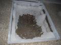 Pflanzbeeten fuer immegruene Straeucher und Baeume (5)