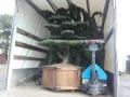 Mädchenkiefer / Pinus Parviflora Gartenbonsai