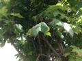 Kugelahorn (3)