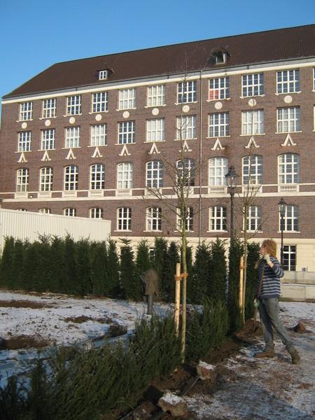 Taxus Baccata Magdeburg
