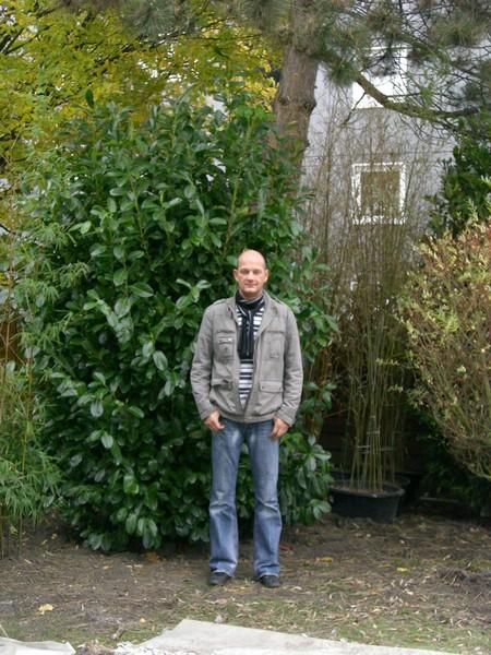 prunus_rotundifolia_300-350-cm-solitar-1