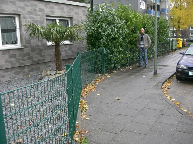prunus_rotundifolia_300-350-cm-solitar-hecke