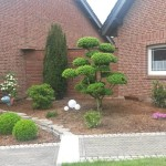 Gartenbonsai im Vorgarten