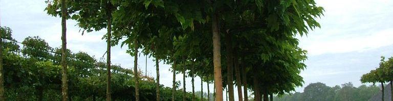 Dachspaliere spenden Schatten für eine gemütliche Ecke im Garten