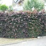 Gartenarbeiten im Mai – Ein Überblick