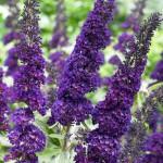 Frisch gepflanzte Ziergehölze & Gartenpflanzen – welcher Winterschutz ist empfehlenswert?