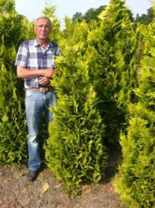 Kann man Thuja Yellow Ribbon und die Scheinzypresse Ivonne in Mischhecke pflanzen?