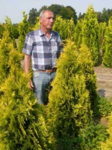 Tipps zur Pflanzung und Pflege von Zypressen