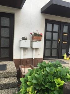 fragen bilder pflanz und pflegeanleitungen rund um das thema gartenpflanzen. Black Bedroom Furniture Sets. Home Design Ideas