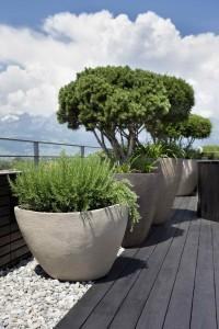 Ungefähr solche Pflanzen werden als Kübelpflanzen gesucht