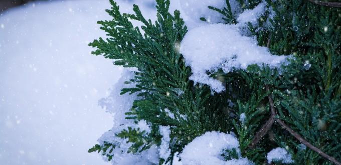 winter-1971642_1280