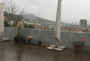 Laubbaum als Schattenspender für Dachterrasse gesucht
