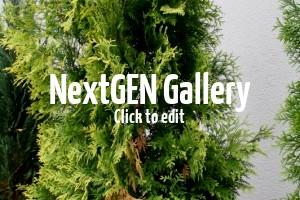 Zypressen und Thuja Smaragd werden braun – Tipps und Empfehlungen?