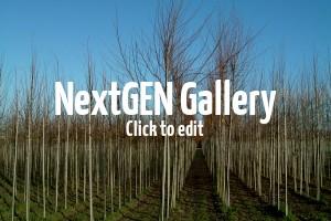 Mitte bis Ende Oktober – perfekte Pflanzzeit für Laubgehölze und Obst-Bäume