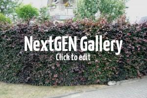 Rund ums Gärtnern – Gartengeräte, Transportmöglichkeiten uvm.