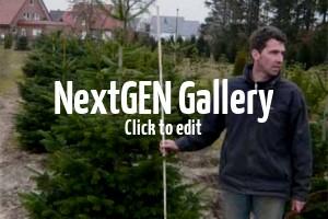 Tolle Nadelgehölze, die für Outdoor-Weihnachtsbäume geeignet sind