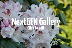 Pflanzenempfehlung für einen Steingarten – Stauden & welche Rhododendron?