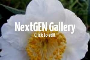 Japanische Kamelien / Camellia japonica – tolles Zierelement mit außergewöhnlicher Blütenpracht